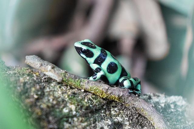 pralesnička batiková
